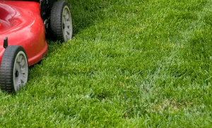 Lawn Mowing Finchley