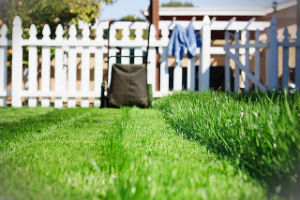 grass-cutting-services-finchley